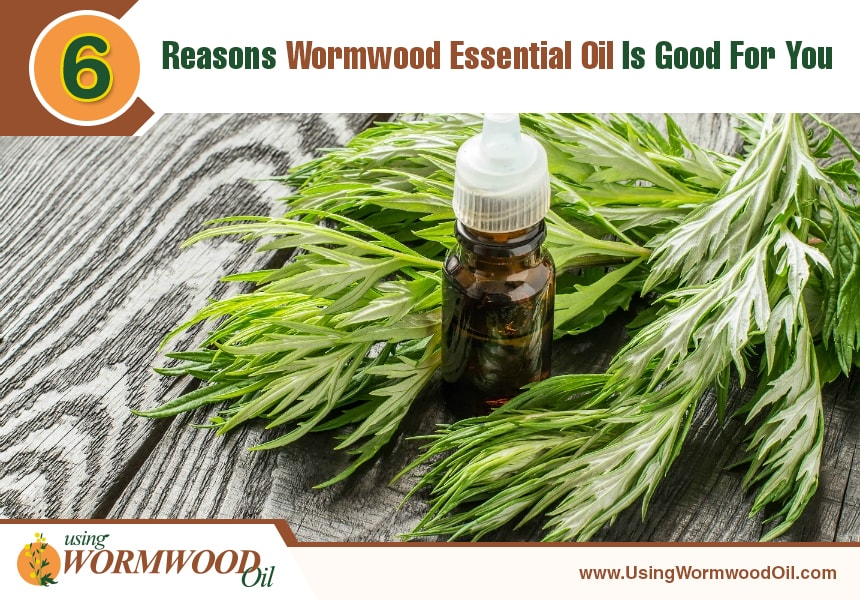 wormwood oil uses