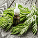 6 Reasons Wormwood Essential Oil Is Good For You